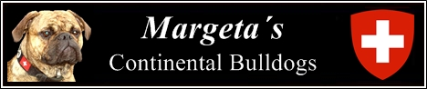 Continental Bulldog Zwinger Margeta`s