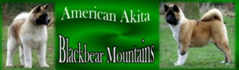 Blackbear Mountain's American Akitas